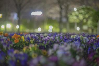 高松市中央公園夜の花