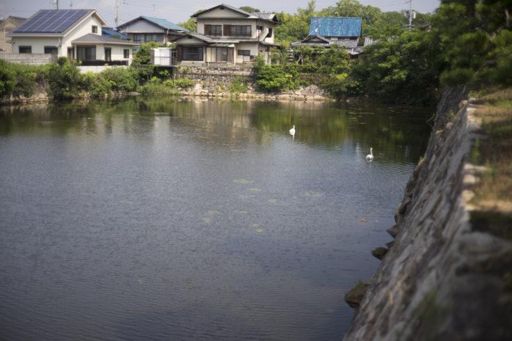 岡山城の白鳥