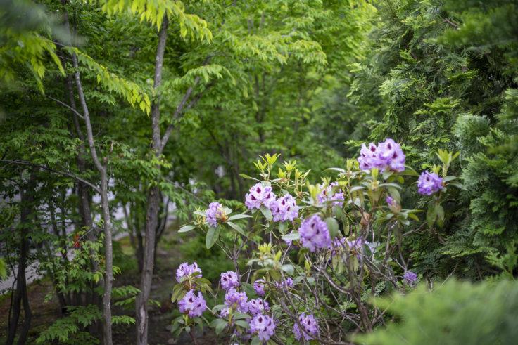 朝日酒蔵の花