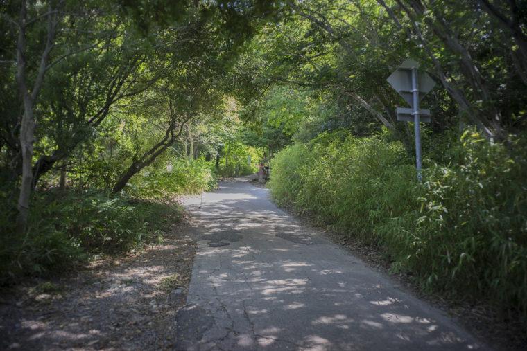 屋島登山道2