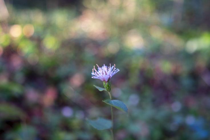 吉見稲荷山古墳に咲いていた花
