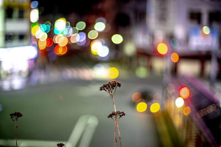 夜の枯れた花