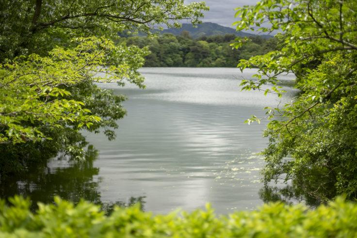 公渕森林公園の池