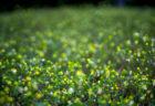 公渕森林公園の花