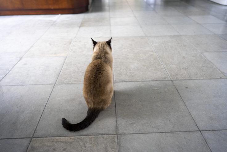 鳴門ガレの森美術館の猫