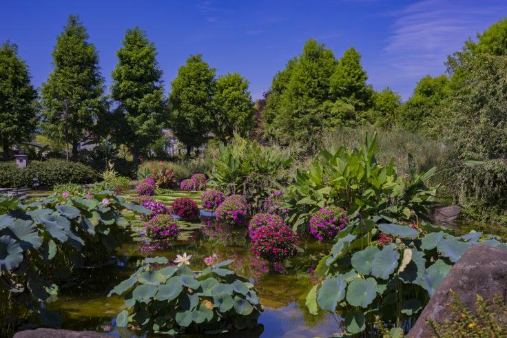 みずの森花影の池