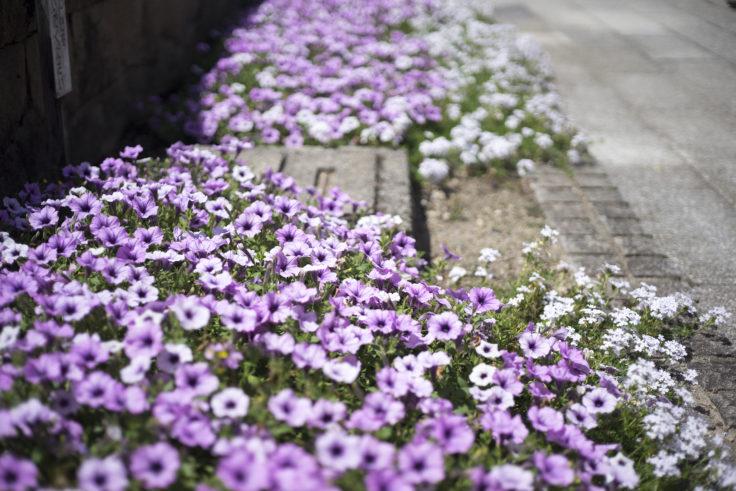 みずの森の花