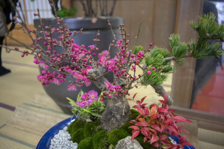 天龍寺の生け花