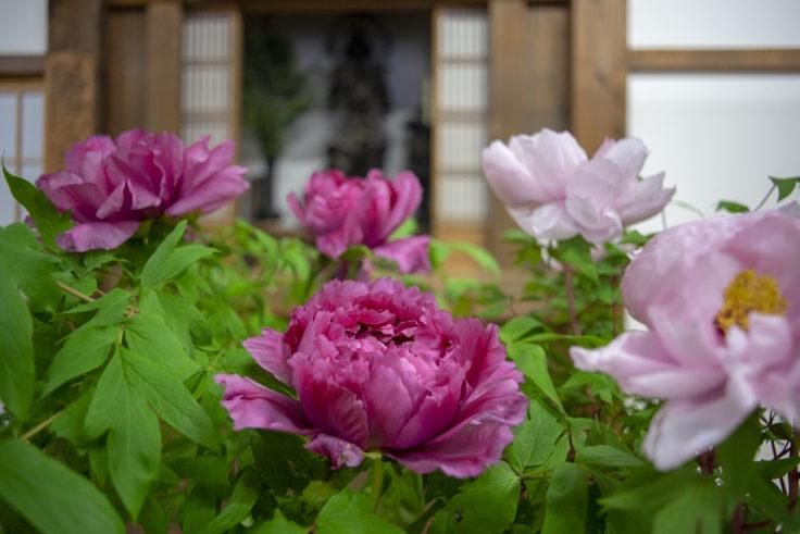 天龍寺の生け花2