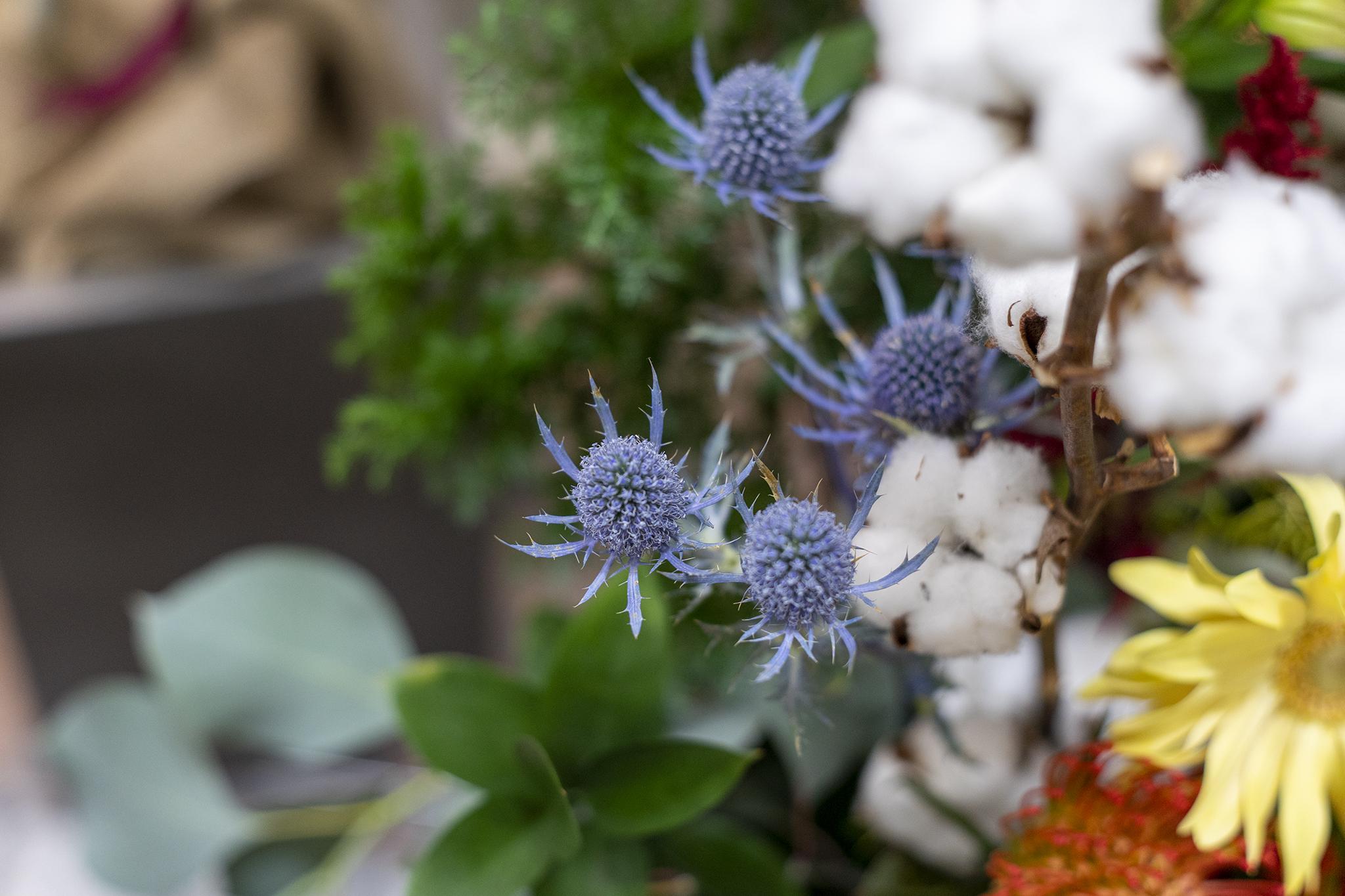エリンジウムの花言葉と誕生花
