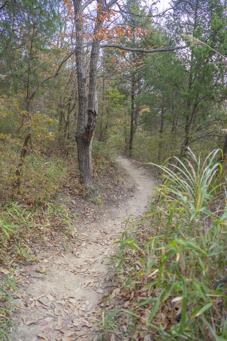 由良山の登山道2