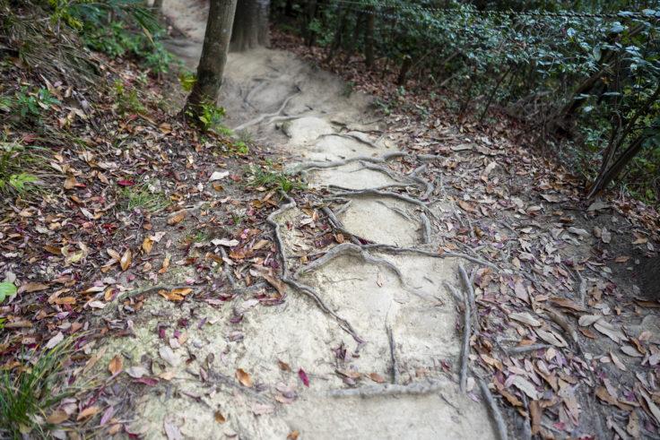 由良山の登山道4