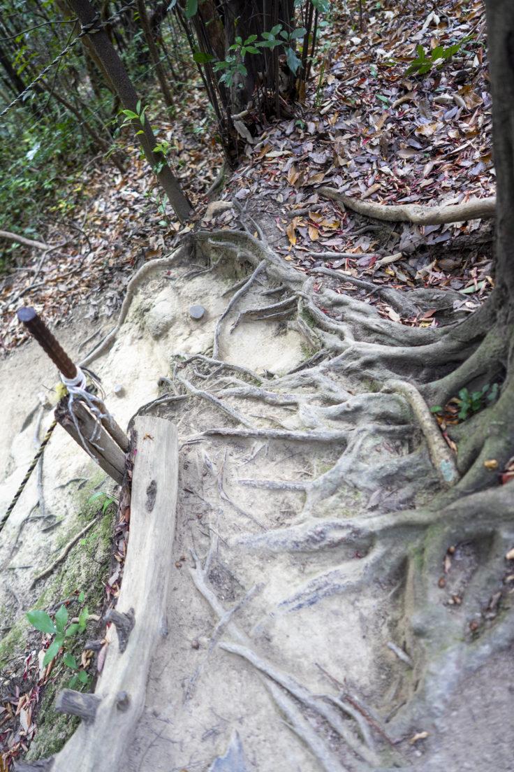 由良山の登山道5