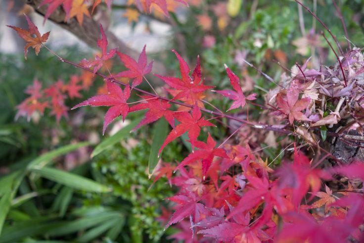清水神社の紅葉