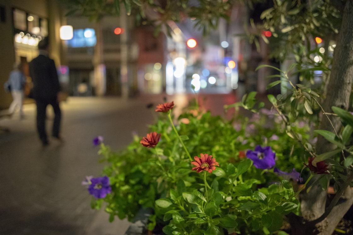 夜の花10