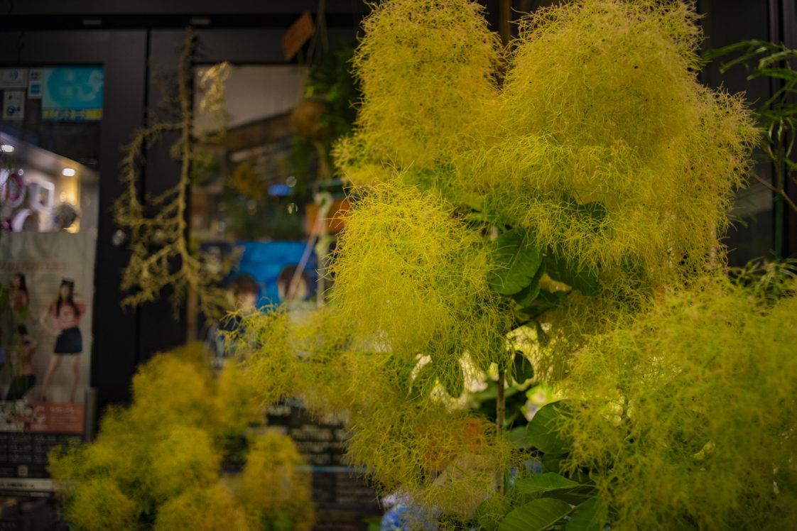夜の花11