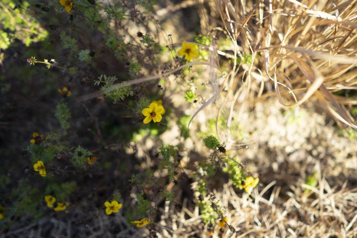 仏生山の森ガーデンの花