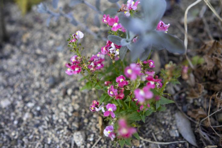 仏生山の森ガーデンの花2