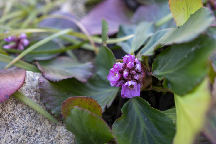 仏生山の森ガーデンの花3