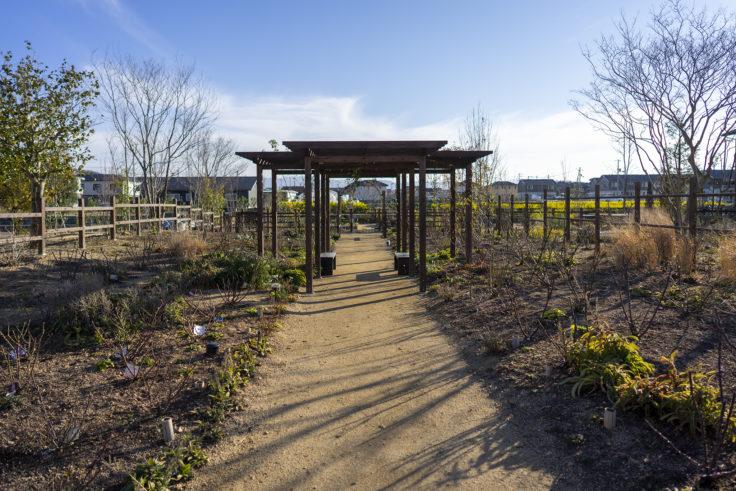 仏生山の森ガーデンバラの庭