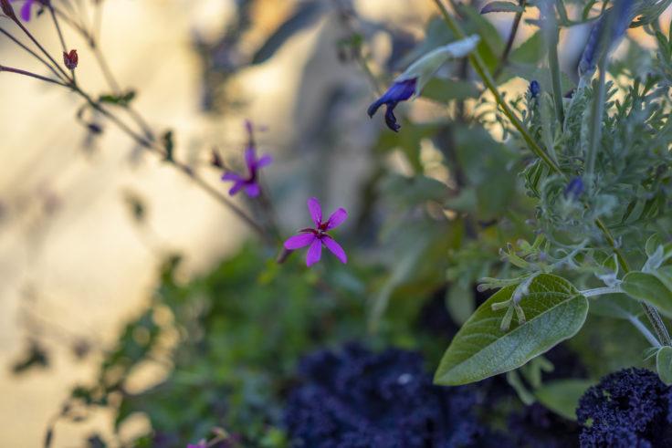 仏生山の森ガーデンの花8