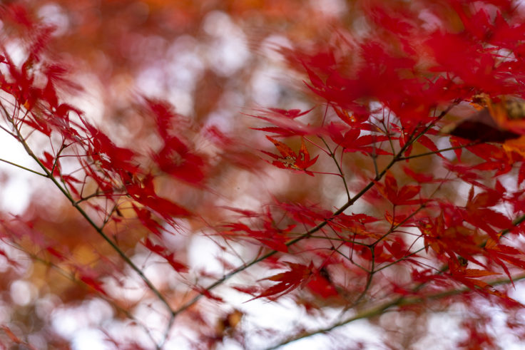 公渕森林公園の紅葉2