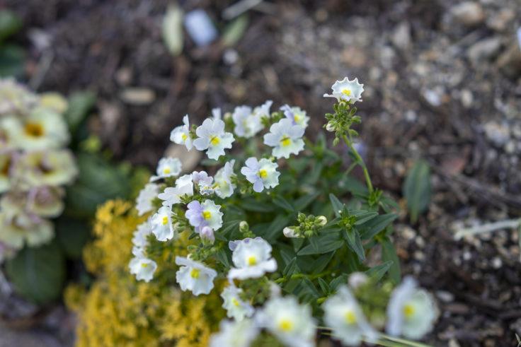 仏生山の森の花
