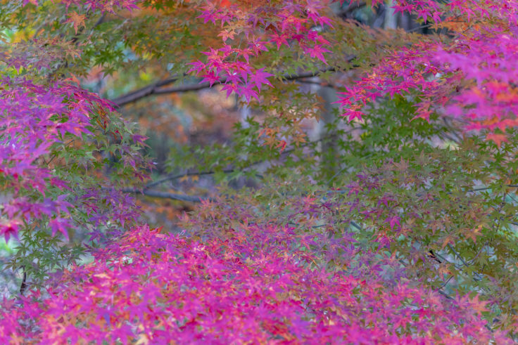 公渕森林公園の紅葉4