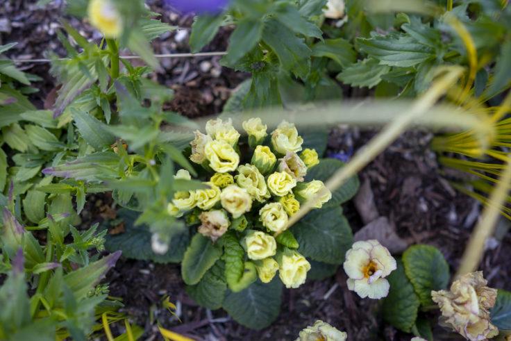 仏生山の森の花2