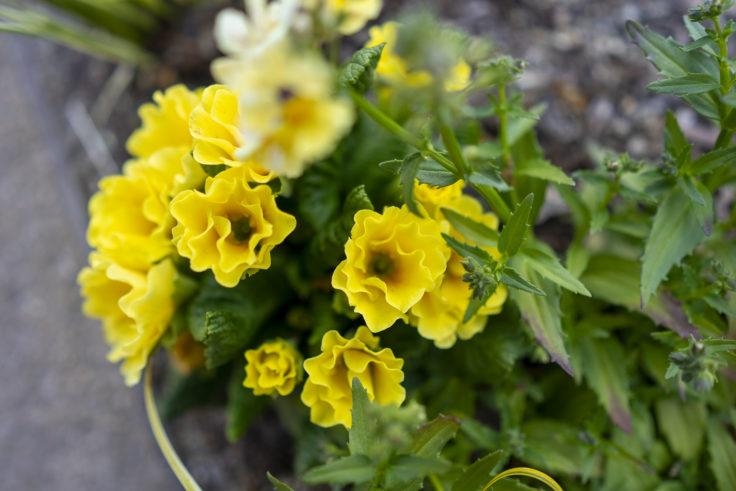 仏生山の森の花3