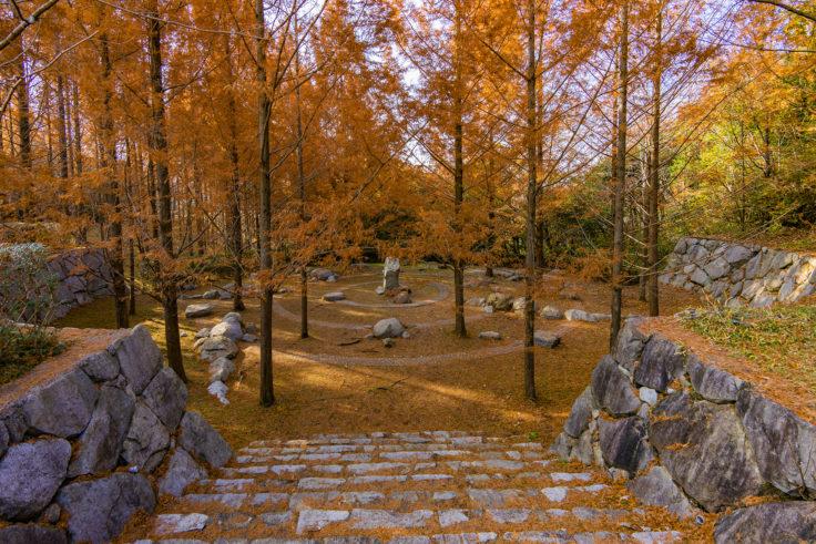 太古の森のメタセコイア紅葉6