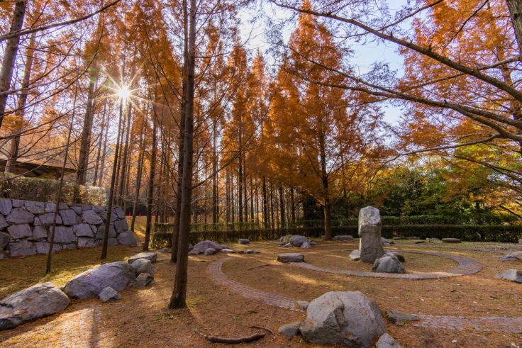 太古の森のメタセコイア紅葉7