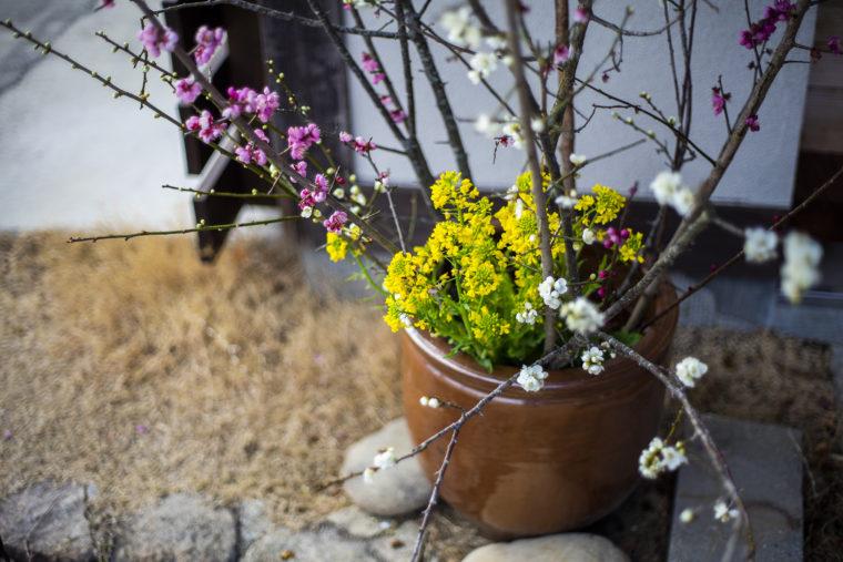 みろく自然公園の菜の花