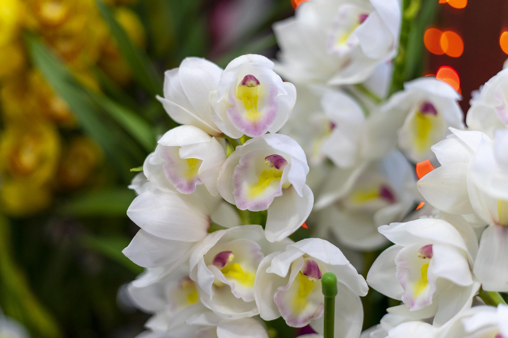 シンビジウムの花言葉と誕生花