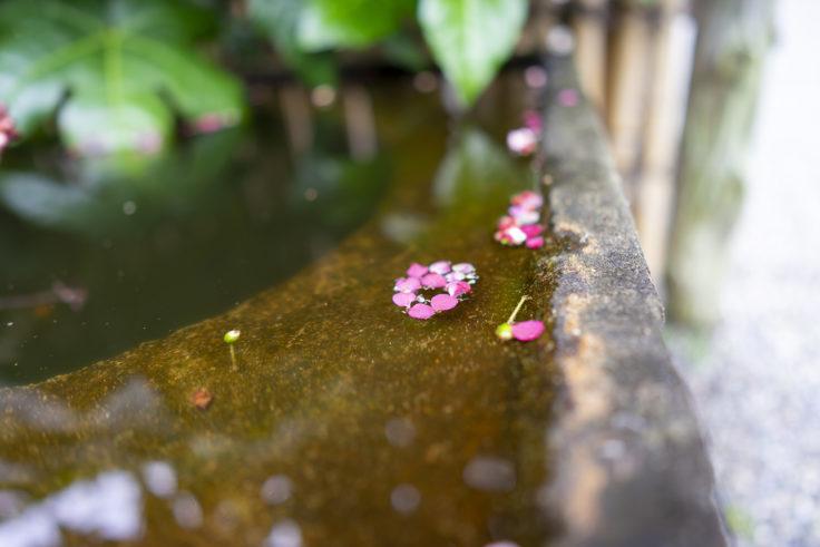 三谷製糖の手水に浮かぶ梅の花弁