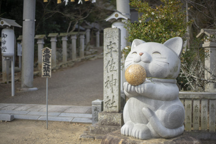 宇佐神社の猫