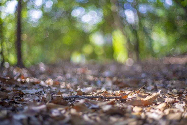宇佐神社の森林