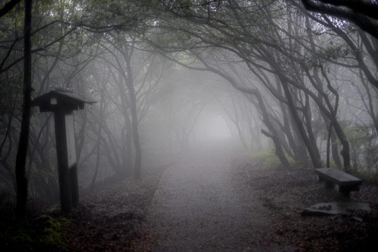 屋島遊鶴亭までの道3