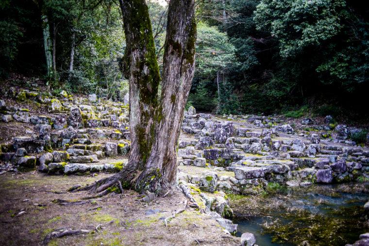 宝光寺の庭園斜め