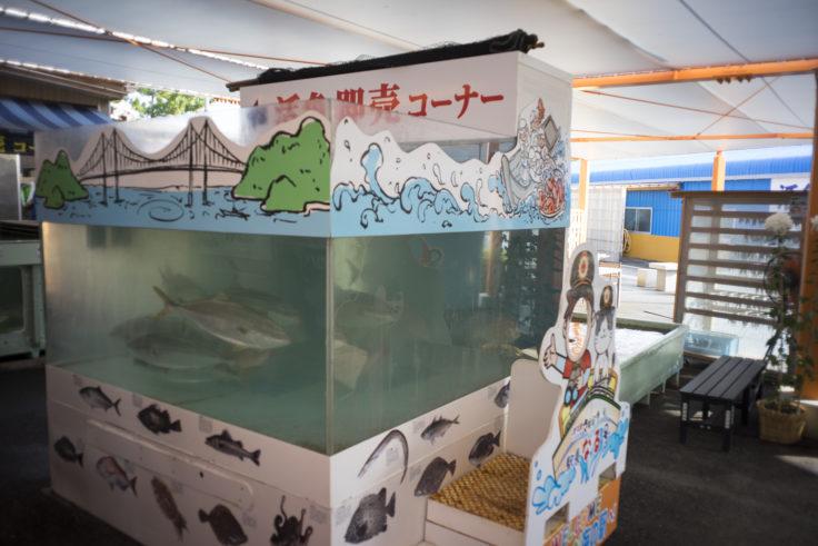 北灘漁協組合さかな市の水槽