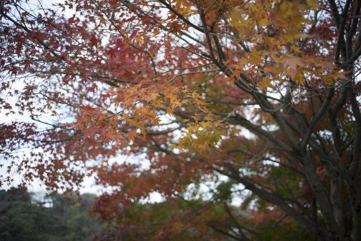 眉山駐車場の紅葉