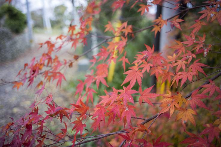 眉山の紅葉4