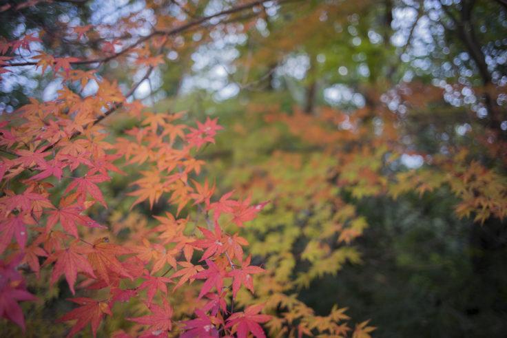 眉山の紅葉5