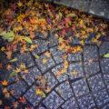 眉山の紅葉