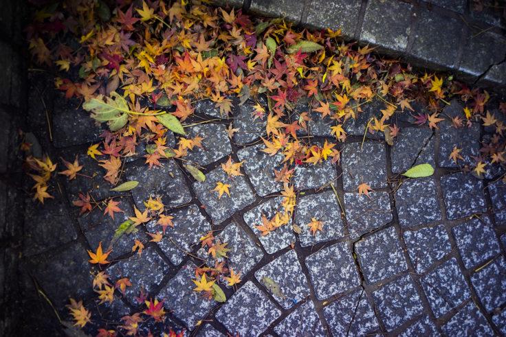 眉山の紅葉落ち葉