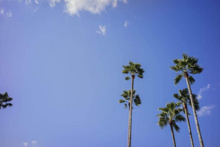 徳島駅のヤシの木