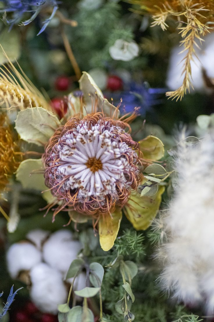 夜の花をマクロレンズで撮る