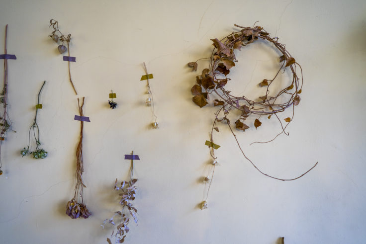 bouffier la rue(ブフィエ・ラ・リュ)の壁の花