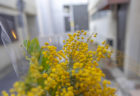 bouffier la rue(ブフィエ・ラ・リュ)のミモザの花束