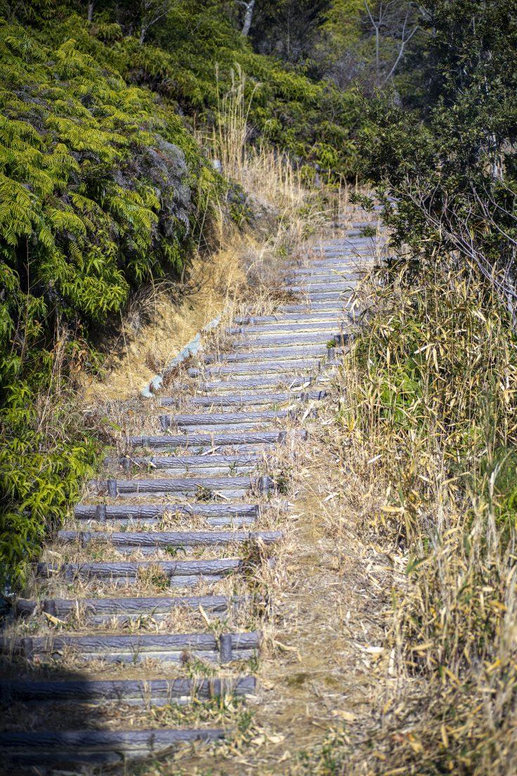 さぬきの森森林浴公園階段2